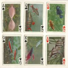 Vintage Collectible playing cards.Tropical Fishes